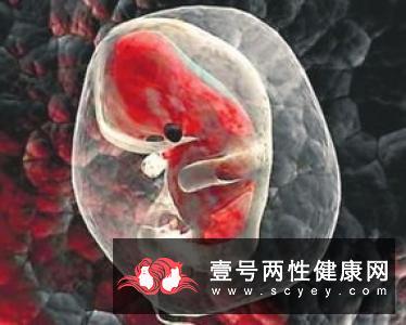 胚胎是什么