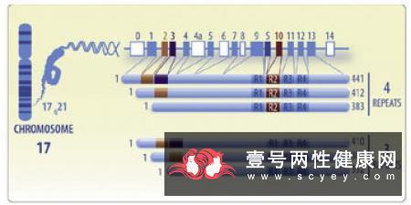 变性对蛋白质功能性质的影响